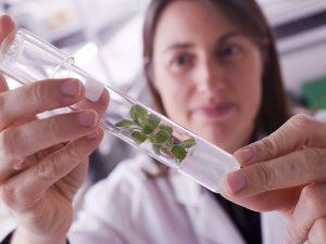 Vegenov intervient sur un large éventail de végétaux, notamment via la culture in vitro - © F. Bétermin - Vegenov