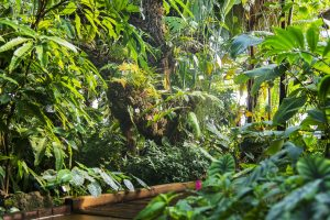 Dépaysement assurédans les serres tropicales - © D.R.