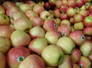 Une alimentation limitée des fruits en sucres en début de croissance est favorable à la synthèse et à l'accumulation de caroténoïdes - © J.-F. Coffin