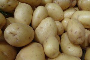 La pomme de terre est l'un des rares féculents à contenir de la vitamine C - © J.-F. Coffin