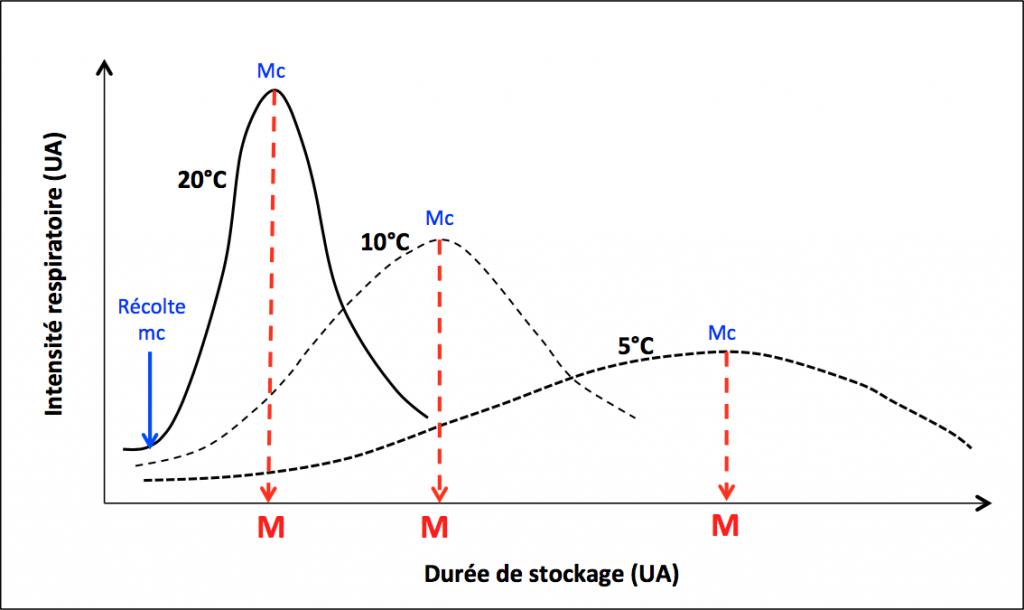 Figure 3. Influence de la température sur l'évolution, au cours du temps, de l'intensité respiratoire de fruits climactériques. La réfrigération retarde la maturation (M). Mc, maximum climactérique; mc, minimum climactérique. UA, unité arbitraire.