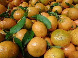 Les fruits non-climactériques, comme les agrumes, ne peuvent murir que s'ils restent attachés à la plante-mère - © J.-F. Coffin
