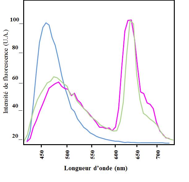 Figure 2 – Spectres d'émission d'extrait de pétales (en violet), de feuilles (en vert) et de racines (en bleu)