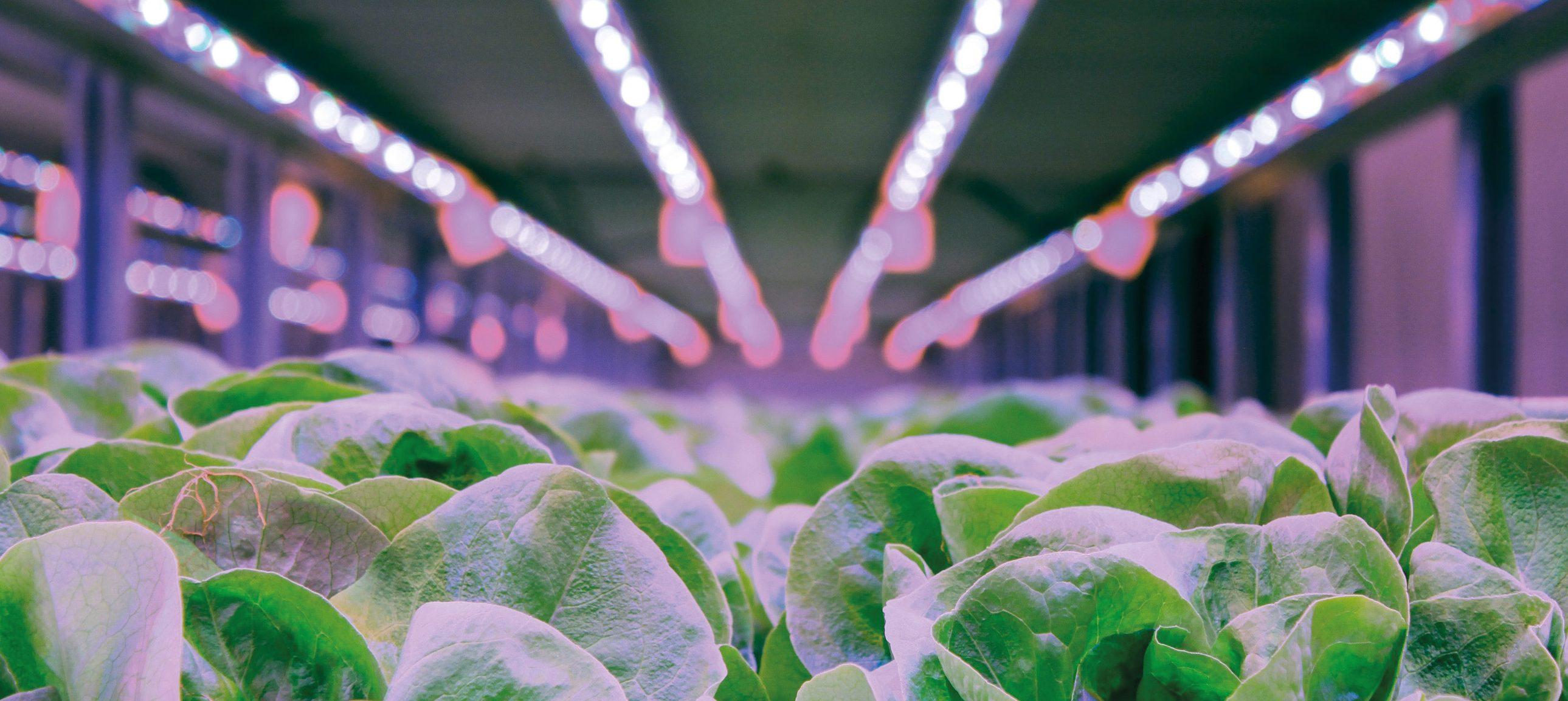 Grâce aux LED, il devient aisé de recréer un biotope extrêmement favorable aux cultures ou de réinventer les programmes de culture en les faisant varier selon les stades de développement des plantes.