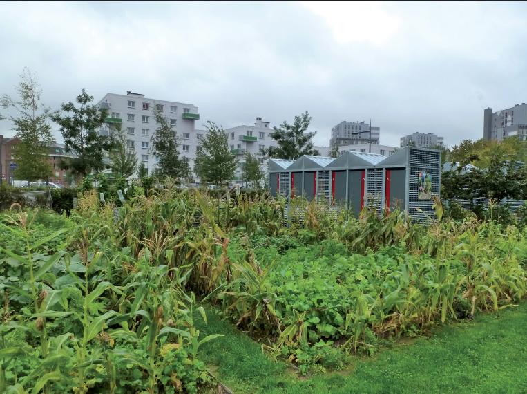 Jardin des cultures à Lille-Sud (59). L'agriculture urbaine, amateure ou professionnelle, fait désormais partie des politiques d'agglomérations - © Plante & Cité/Louise Seguin
