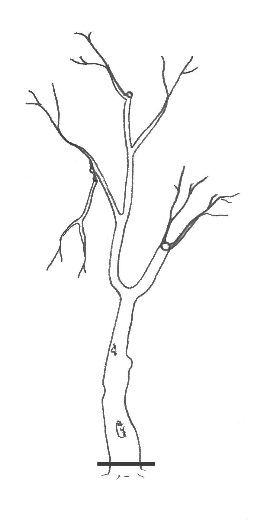 Le recépage consiste à couper un arbre ou un arbuste à proximité du collet.