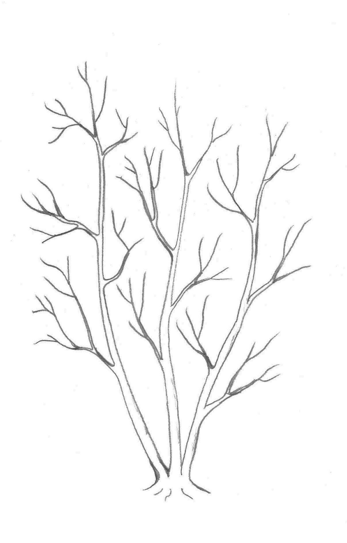 Le recépage peut être réalisé sur une tige saine pour former une cépée, c'est-à-dire plusieurs troncs se développant sur une même souche.