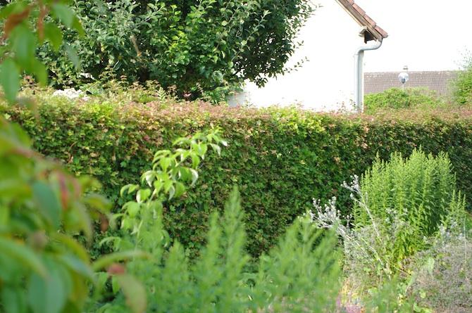 De bons végétaux pour construire des haies architecturées - Jardins ...