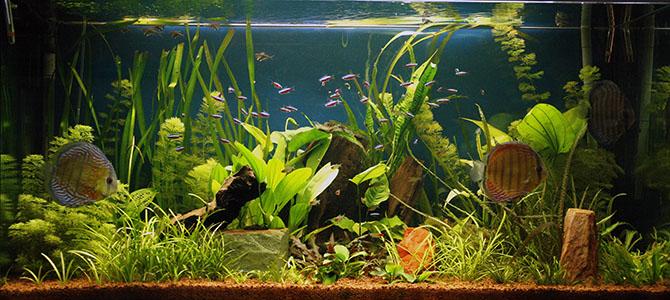 les plantes d aquariums un monde fascinant jardins de france. Black Bedroom Furniture Sets. Home Design Ideas