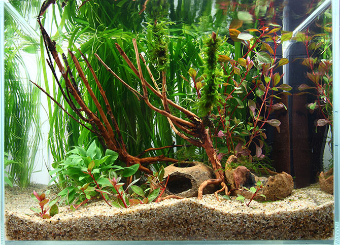 plante aquatique de madagascar