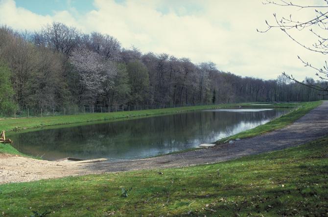 La phyto puration la nature pour d polluer les eaux - Lagunage des eaux usees ...