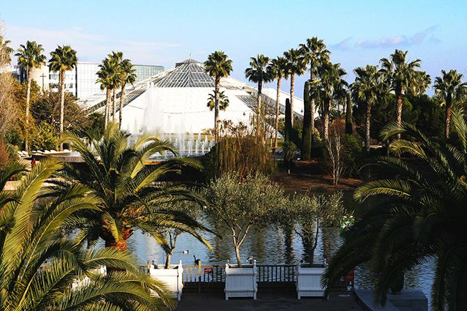 Les palmiers en alignement sur la c te d 39 azur un aper u for Garage les palmiers nice