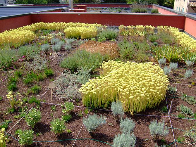 Terrasse Végétalisée Semi Intensive : Toitures v u00e9g u00e9talis u00e9es extensives les contraintes