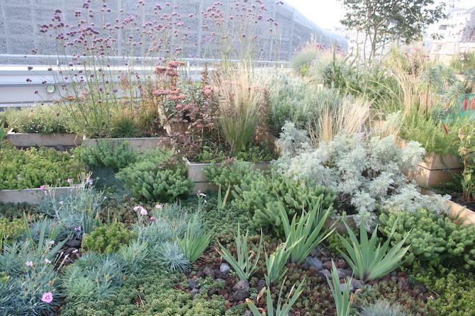 Piscine molitor un jardin sur le toit jardins de france for Quelle plante autour d une piscine
