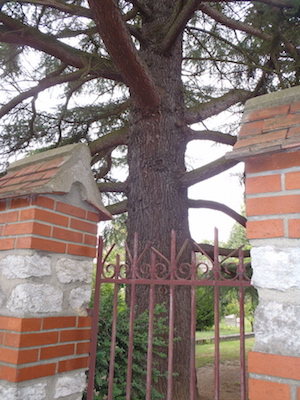 L arbre et la loi jardins de france - Article 673 code civil ...