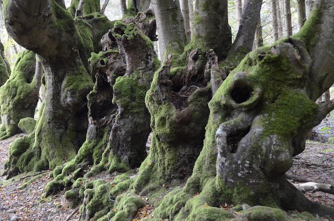 Les arbres remarquables du rep rage la labellisation for Jardins remarquables ile de france
